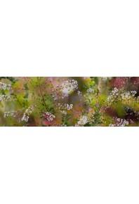 Bluyonda Wildflower Montage Silk Scarf
